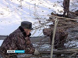 Бобры в Воронежском заповеднике перекрыли движение для машин