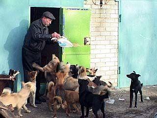Более полусотни собак приютила воронежская семья