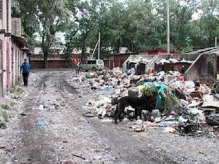 Борьба с мусором и произволом чиновников - удел рядовых воронежцев