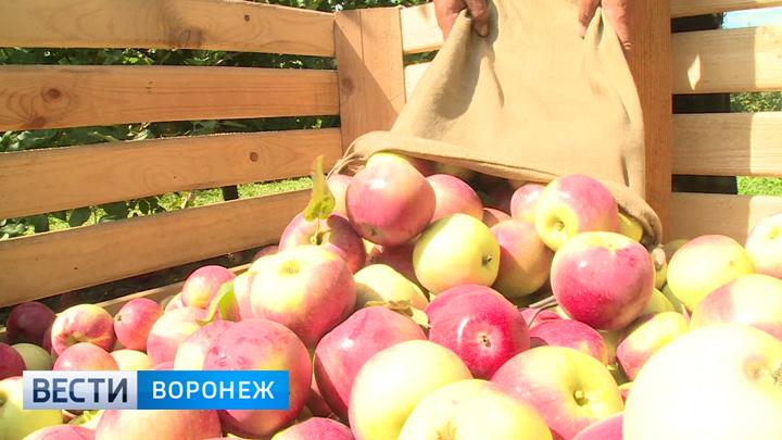 Воронежская область обеспечивает себя яблоками лишь на 60%