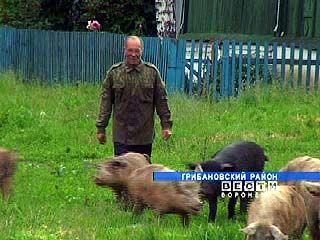 Бывший миллионер Александр Пересыпкин стал потомственным свинопасом