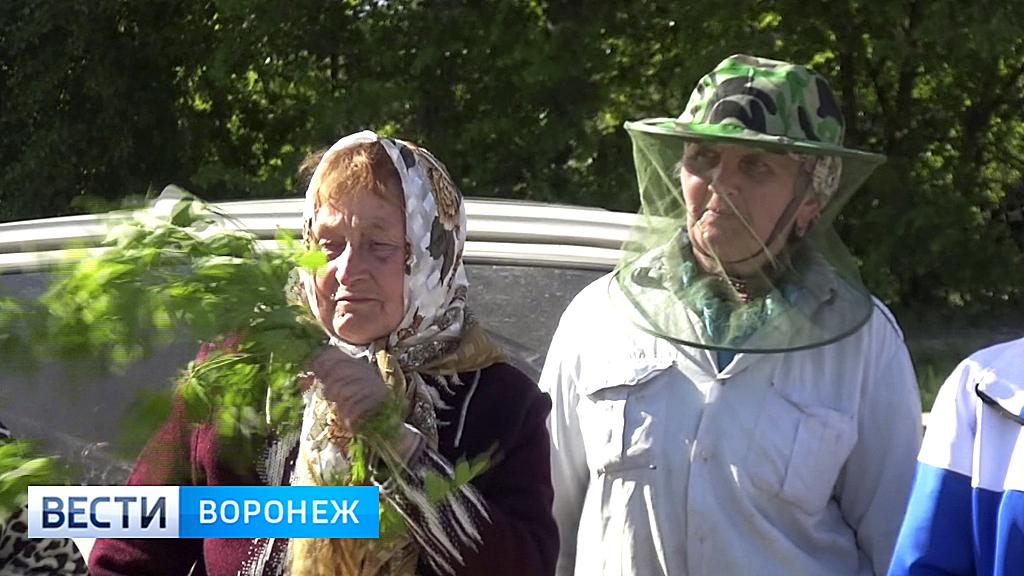 Как уменьшить страдания. Воронежские санврачи рассказали о способах защиты от комаров