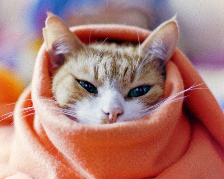 В Воронежской области ожидается аномально холодная погода