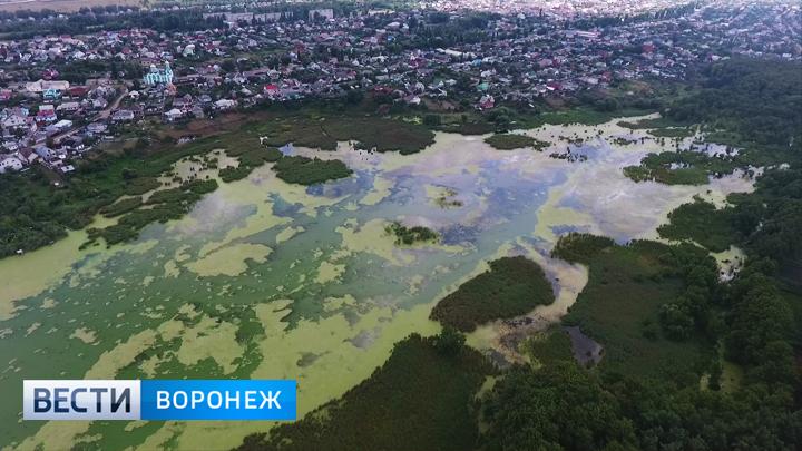 В Воронежской области к концу следующего года исчезнет Масловский затон