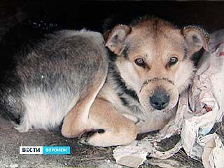Добровольцы не могут поймать раненую собаку, чтобы оказать ей помощь