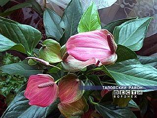 Дом Людмилы Токаревой напоминает ботанический сад