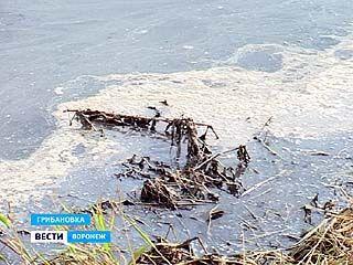 Факт сброса сточных вод Грибановским сахарным заводом не подтвердился
