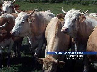 Фермы Воронежской области готовятся к каникулам