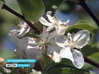 """Фестиваль """"Цветущая яблоня"""" посетили больше пяти тысяч гостей"""