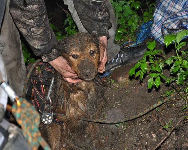 ФОТО: воронежские волонтёры спасли собаку, которая больше суток просидела в колодце