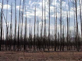 Главное в экологической политике для области - восстановление лесов и утилизация ТБО