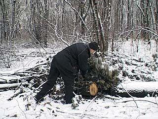 Госимущество проводит инвентаризацию лесного хозяйства