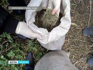 Гость с Украины выращивал коноплю на заброшенных огородах в посёлке Воля