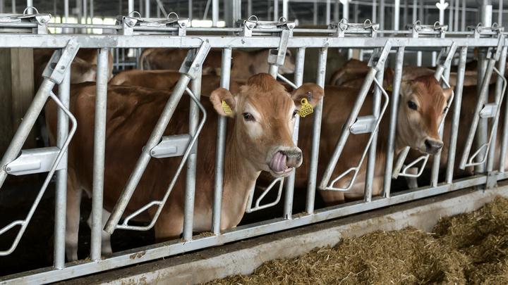В Воронежской области открылись два молочных комплекса на 3,7 тыс. голов