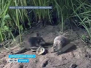 Хоперский заповедник получил грант на сохранение редких видов животных