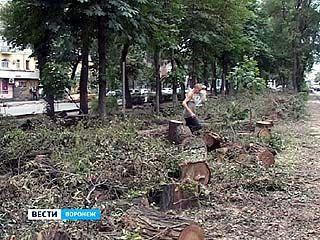 Именные деревья от известных воронежцев пошли под бульдозер