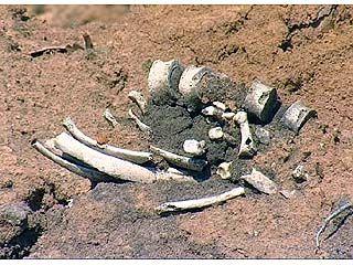 История обнаружения человеческих останков получила новый поворот