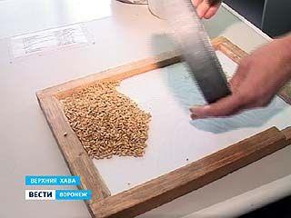 Из проверенных в области 600 тысяч тонн - некачественного зерна лишь около 8%