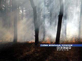 Из-за аномальной жары под Воронежем горят леса