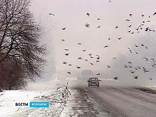 Из-за возгорания полигона ТБО движение по Курской трассе затруднено