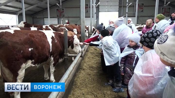 Анализ на витамин Д - endoinfo.ru