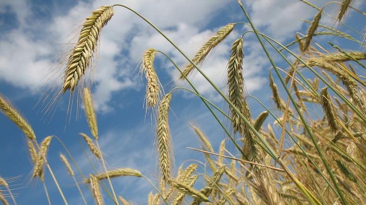 Воронежская область может лишиться льгот на перевозку зерна