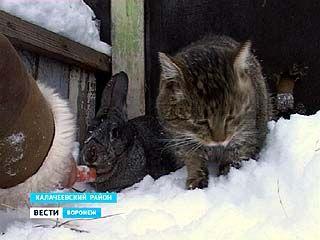 Калачеевские кролиководы адаптировали китайский гороскоп к Воронежской области