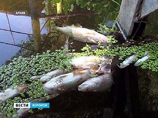 Калачеевский мясокомбинат заплатит 1,5 миллиона рублей за массовую гибель рыбы