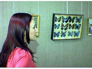 Картины из бабочек могут увидеть воронежцы в музее имени Крамского