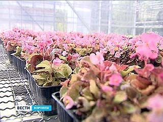 Клонирование - теперь и в Воронеже. Гибриды будут выращивать в уникальной теплице