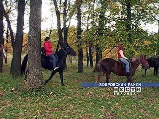 Конный туризм осваивают в Бобровском районе