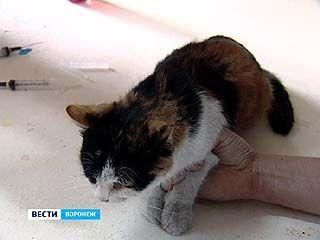 Кошка, попавшая в вентиляционную шахту, сама освободилась из каменного плена