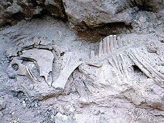 Кости доисторических лошадей обнаружены в Воронежской области