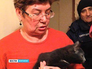 Кота, застрявшего в вентиляции несколько дней назад, удалось спасти