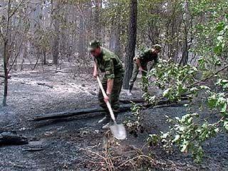 Курсанты ВВАИУ помогают спасателям в лесах под Нововоронежем