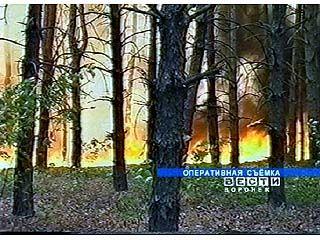 Лесные возгорания происходят в области практически каждый день