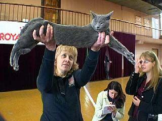 Лучших собак и кошек выбирали на международной выставке