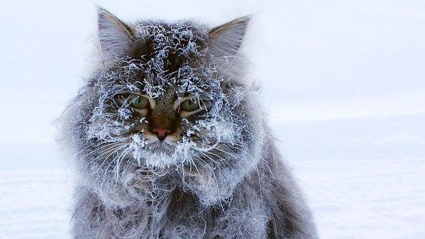 В Воронежской области на рабочей неделе похолодает до -10