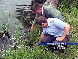 Массовая гибель рыбы зафиксирована в Павловском районе