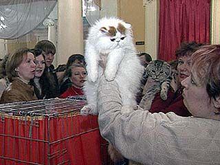 Международная выставка кошек завершилась в Воронеже