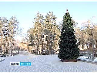 Международные экологи присвоили Воронежу награду