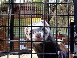 Мини-зоопарк появился в Панинском районе