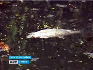 Мор рыбы в Терновском районе. Подозревают сахарный завод в Тамбовской области