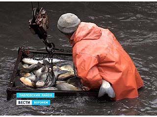 На искусственных водоёмах области началась путина - лов товарной рыбы