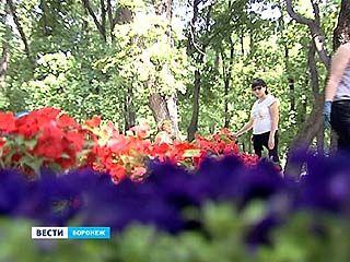 На клумбы Воронежа высадят 15 тысяч квадратных метров цветов - это как два футбольных поля