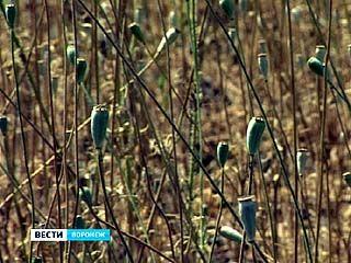 На Машмете обнаружено поле дикорастущего мака