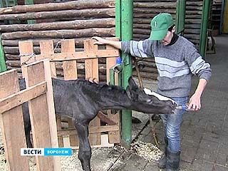 На месяц раньше срока в Воронежском зоопарке родился жеребёнок