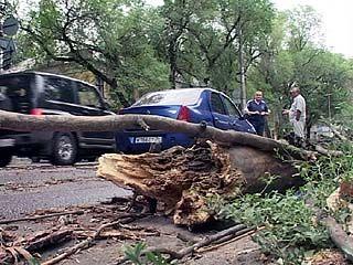На пересечении улиц Бахметьева и Пирогова на машину рухнуло дерево