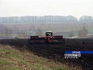 На полях Воронежской области посевная начнется заново