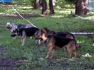На службе в ГУВД работает около 40 служебных собак